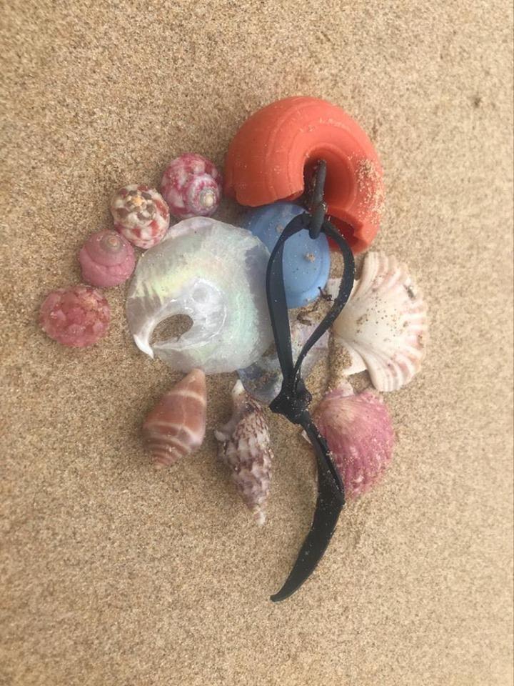 Meia Praia beach treasures