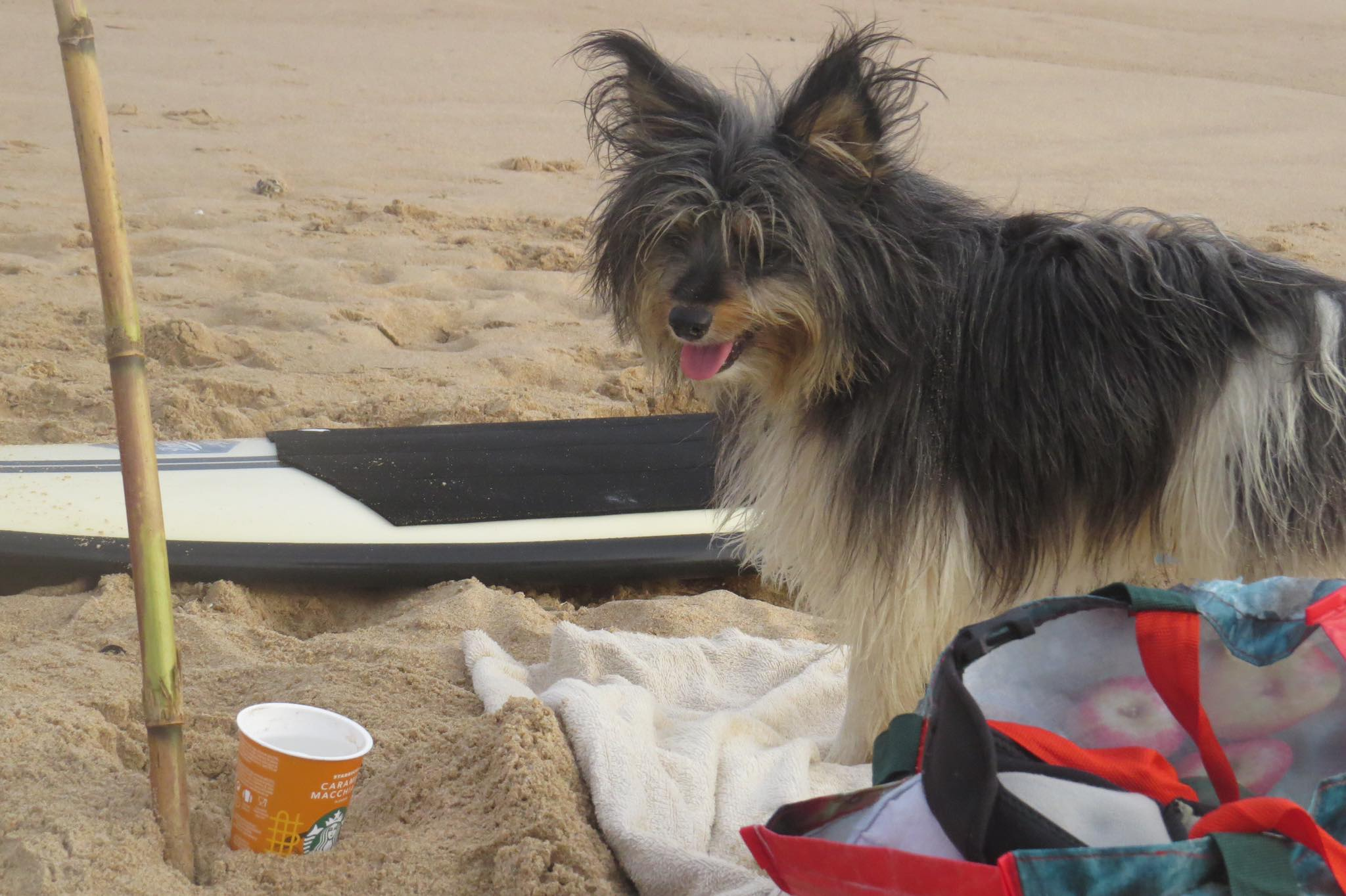 surfdog starbucks