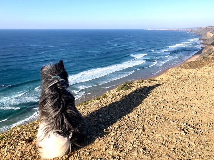 surfdog-algarve-praia-castelejo-cordoama