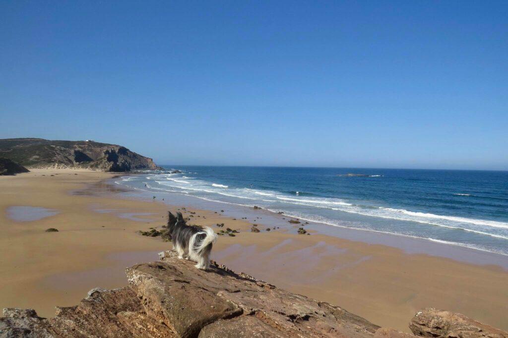 amado-lookout-with-surfdog-surfguide-algarve