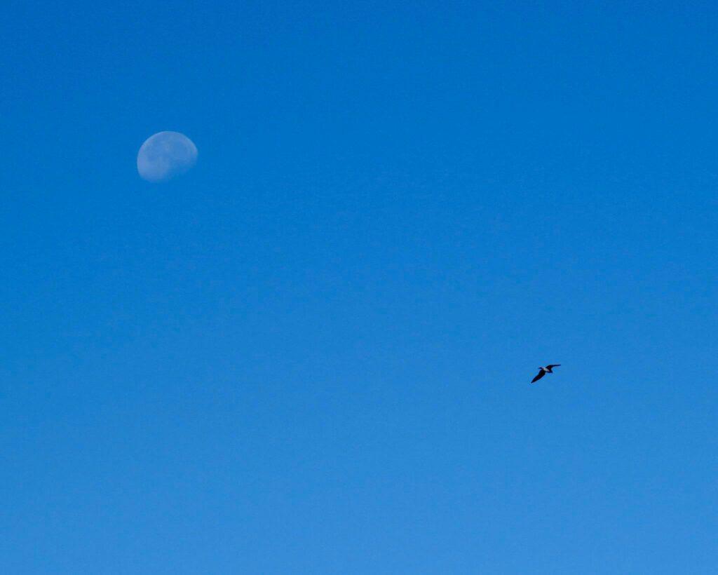 moon-and-bird-sagres-surfguide-algarve