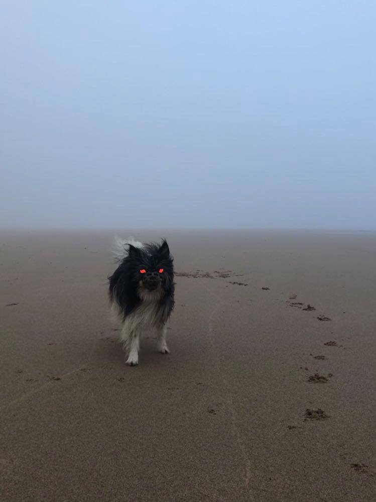castelejo-beach-surf-dog-in-the-mist-surfguide-algarve